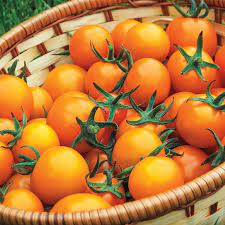 carbs in sun gold cherry tomatoes